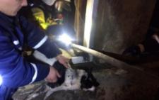У Чернівцях рятувальники винесли двох собак з охопленого вогнем будинку (фото)