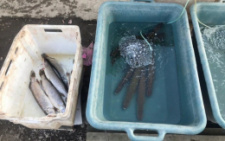 На Буковині в райцентрі виявили незаконний продаж риби на ринку