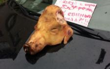 """Народному """"бургомістру"""" Чернівців невідомі підкинули голову свині та пригрозили розправою (фото+відео)"""