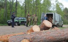 На Буковині лісова охорона бореться з незаконними рубками і за рішеннями суду відшкодовує півмівльйоні збитки за крадіїв