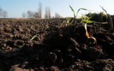 На Буковині фірму, яка три роки не платила оренду, зобов'язали повернути 30 гектарів землі