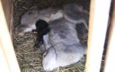 В селі на Буковині через хімікати отруїлись люди, загинули сотні кролів та сімей бджіл (фото)