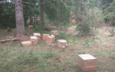 На Буковині прикордонники виявили тридцять ящиків контрабандних цигарок