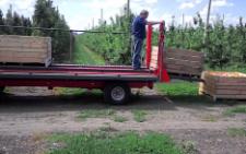 На Буковині під час збору яблук у Ломачинцях на жінку наїхав контейнеровоз