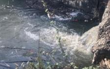 У Чернівцях в озері біля парку «Жовтневий» масово гине риба