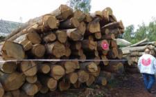 На Буковині виявили перевалочну базу деревини, де ліс з області складають на нелегальний експорт (відео)