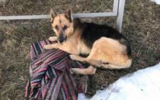 У Чернівцях волонтери врятувати сліпого собаку від смерті