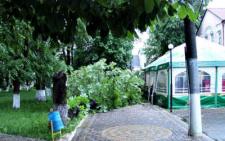 На Буковині на торговий павільйон впало дерево (фото)