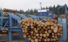 На Буковині експортерів дров стає все більше