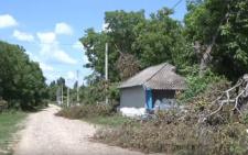 На Буковині працівники РЕМу замість чистки позрізали дерева (відео)